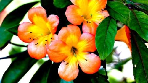 kwiatyaostr